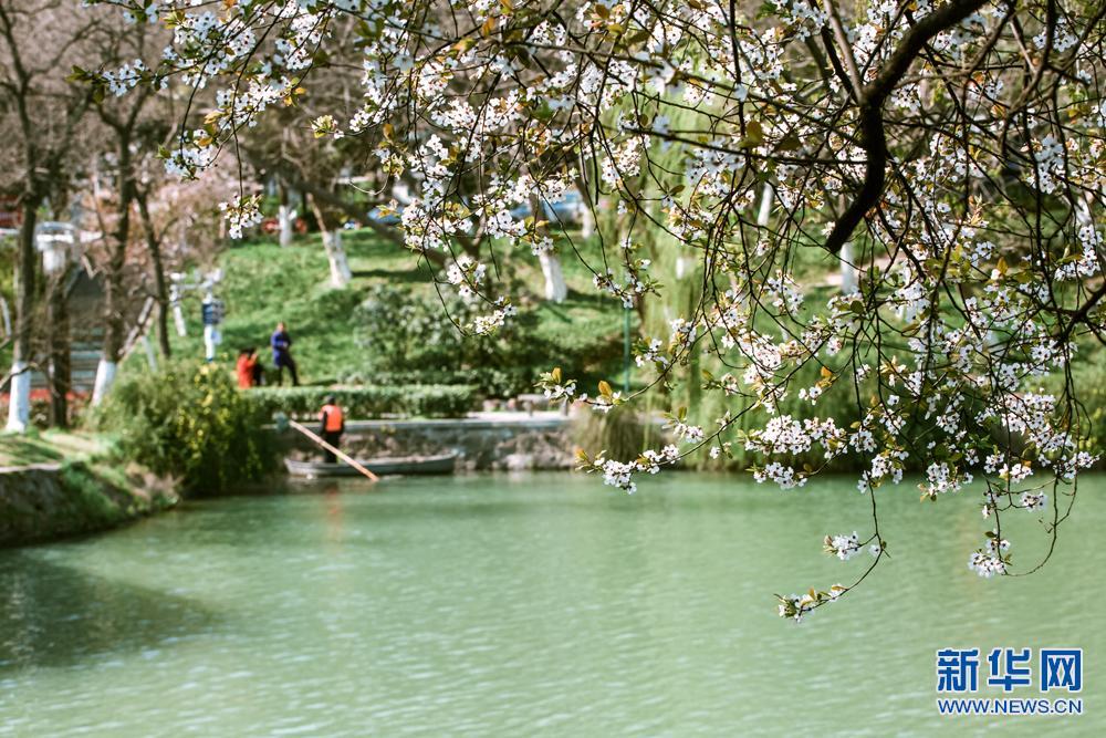 春风又绿包河岸