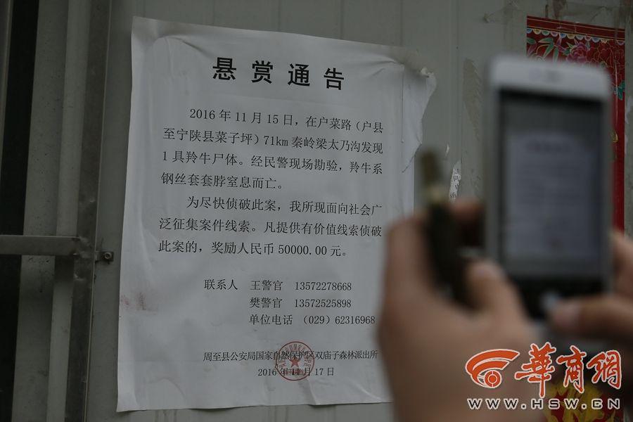 户县涝峪村民举报羚牛被伤害致死 7名工人被刑拘