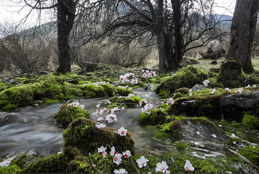 中国最大桃花谷即将美丽开谷
