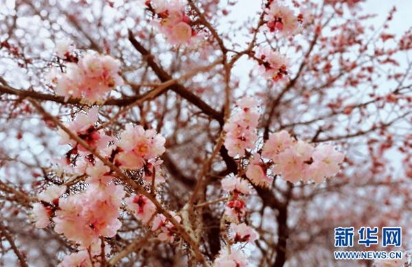 """不赏花何以谈春天?来看看青海春日里的""""花花""""世界"""