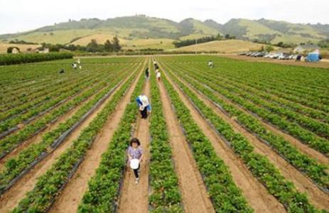 陕西省将着力严查借设施农业用地从事经营性项目