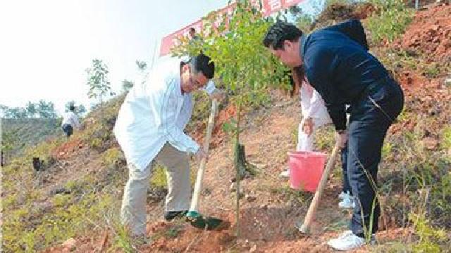 鞍山:今年计划义务植树370余万株