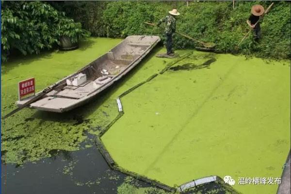 温岭横峰:全力围剿浮萍 恢复河道清洁