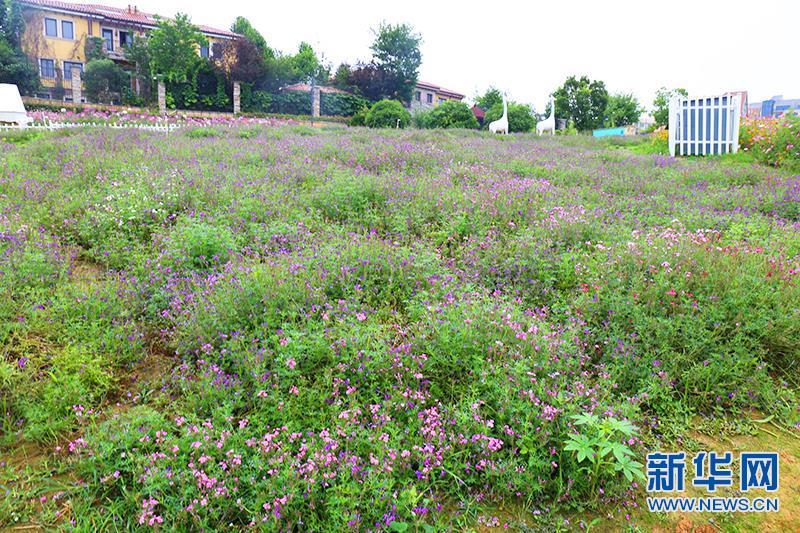 杭州郊区如画六月