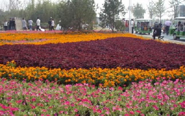 """(信息)""""绿博园""""鲜花竞放新郑机场"""