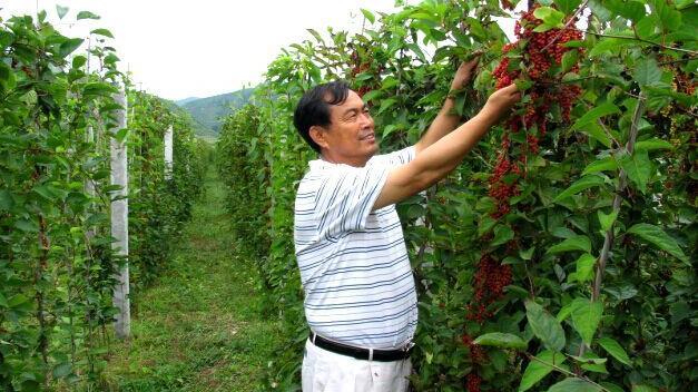 http://www.ln.xinhuanet.com/topic/2016/maofengmei/jujiao/jiuwen/20150304/2691679_c.html