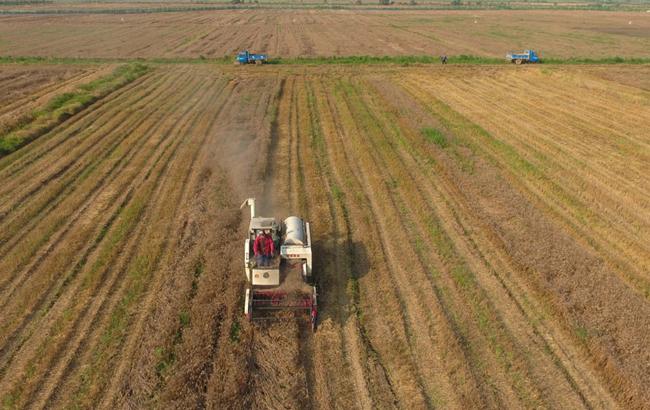 全国麦收超八成 日机收面积超过1500万亩