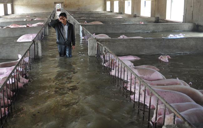 安徽6000多头生猪被洪水围困 养殖工人挥泪和生猪诀别