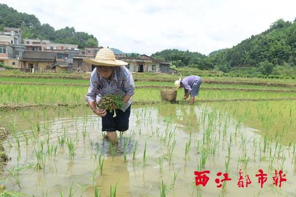 灾后参田村逐步恢复正常生产生活秩序