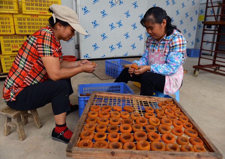 广西恭城:小月柿撑起大产业