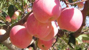 营口水果出口量前10个月同比增281.8%
