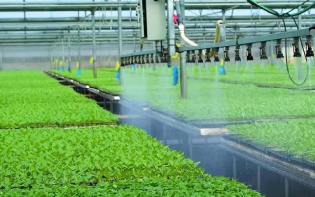 """太谷县加快构建现代农业产业""""三体系"""""""