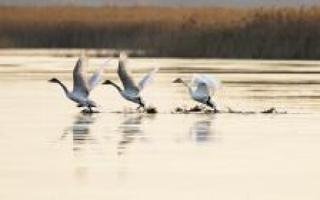 北大港湿地大部分水域没上冻 今年不少候鸟没走