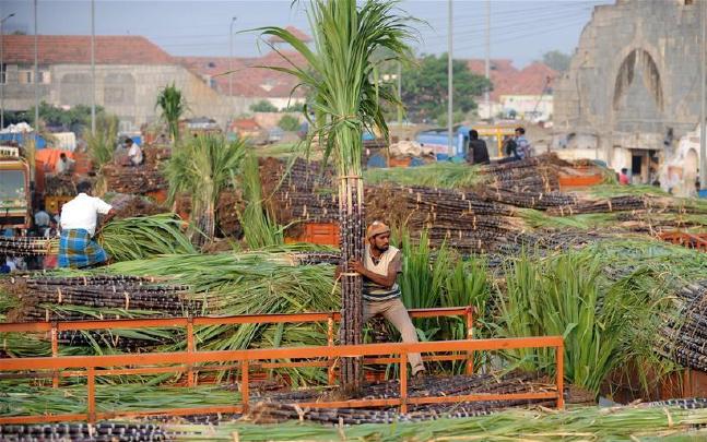 印度庆祝蓬加尔收获节