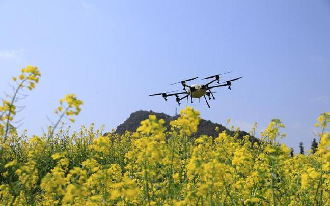 云南罗平:无人机新科技为数万亩油菜稳产增收
