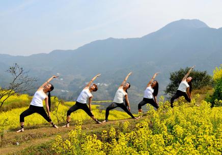 油菜花海秀瑜伽