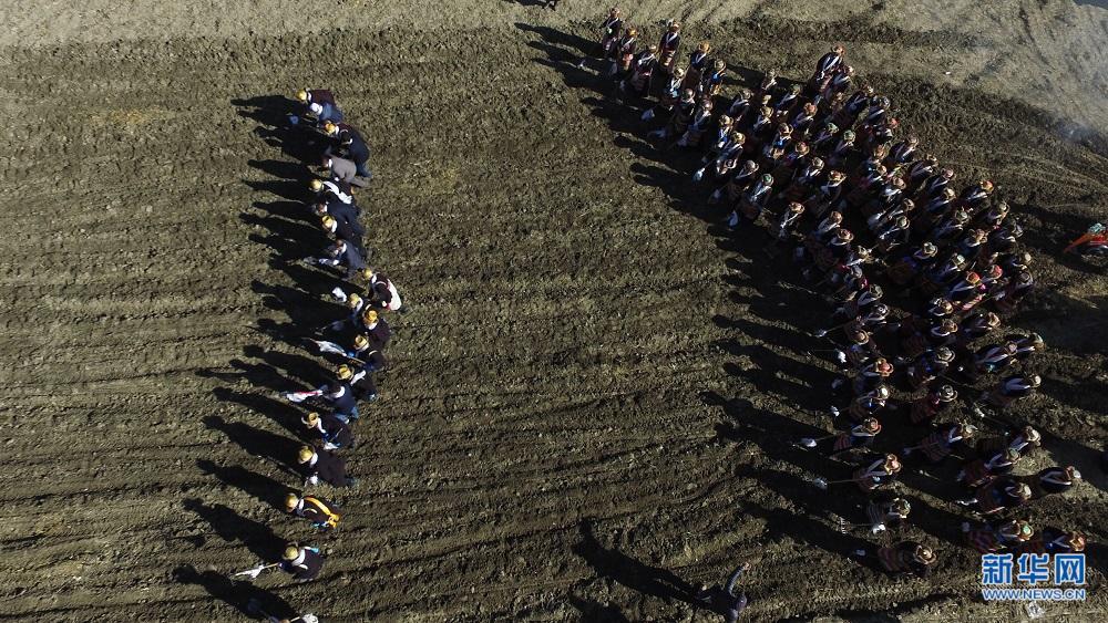 西藏春耕第一犁