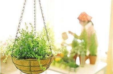 赏花、种花、养花 三月春光好 如何让你更爱花