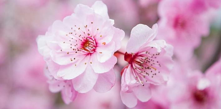 春色动人 赏花经济火热