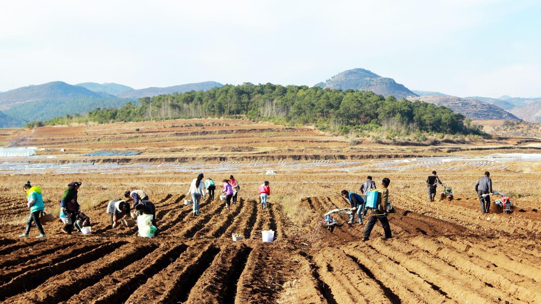 辽宁今年粮食作物播种面积近320万公顷 玉米调减8.03万公顷
