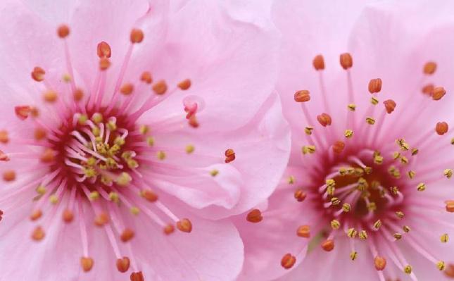 微距里的春花
