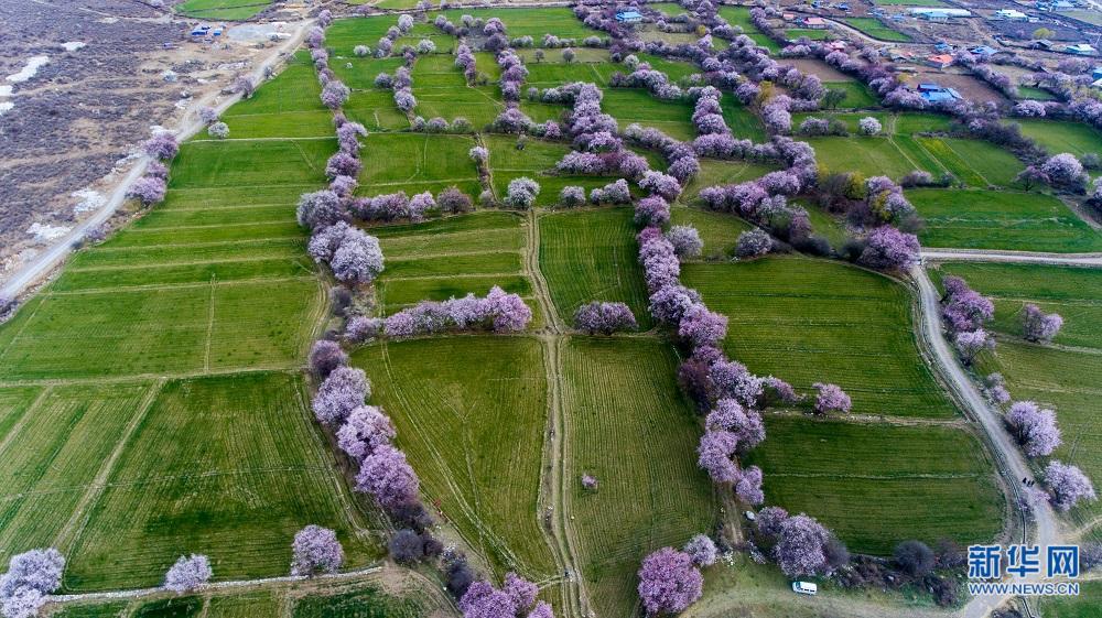 大世界基尼斯之最——中国最大的桃花谷