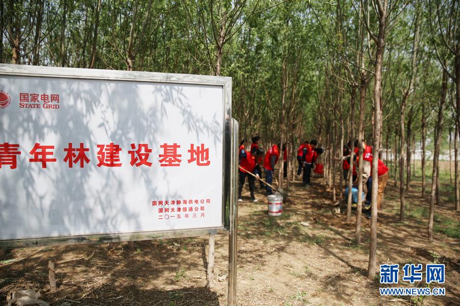 国家电网天津静海供电公司团委开展联合护绿青年交流活动