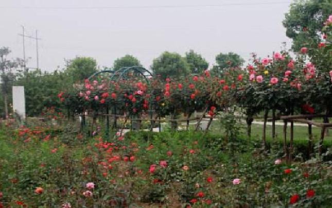 感恩母亲节 郑州志愿者带18位母亲畅游植物园