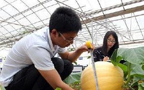 神奇的太空蔬菜 南瓜可重达100多公斤