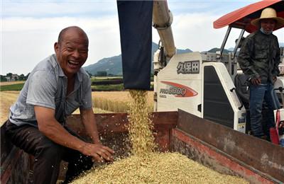 陕西小麦开始收割