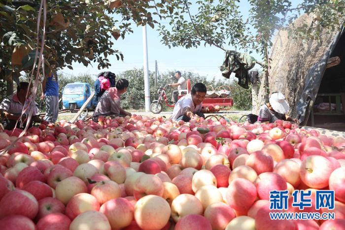 一个苹果,也是一件工业品——农业供给侧结构性改革的富县实践