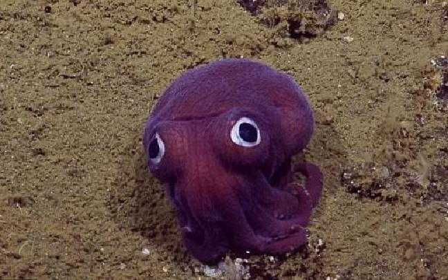 """科学家发现超萌海底""""怪物"""""""