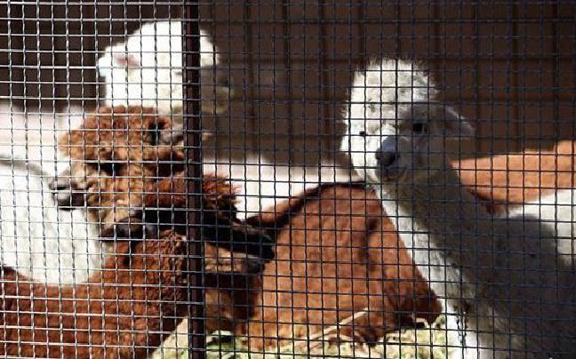 """昆明""""山寨动物园""""被罚2000元关门 动物已搬新家"""