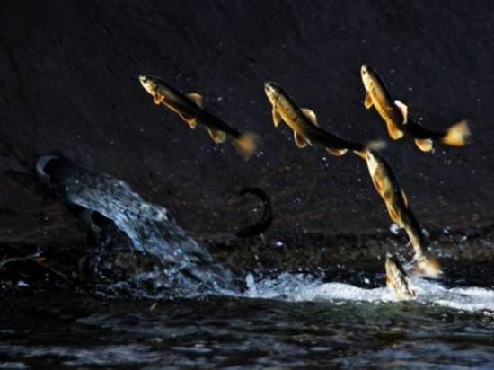 青海湖裸鲤资源量增至7.08万吨为v视频视频27爱爱聊初期图片