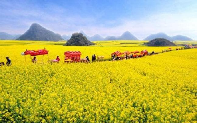 今年春节赏花游玩 就到曲靖优惠多多