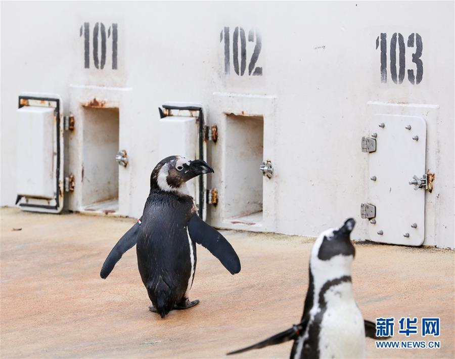 冬日动物园