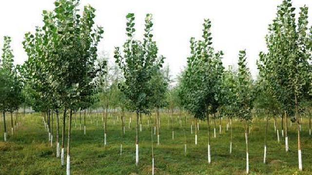 2017年辽宁省计划完成人工造林8.67万公顷