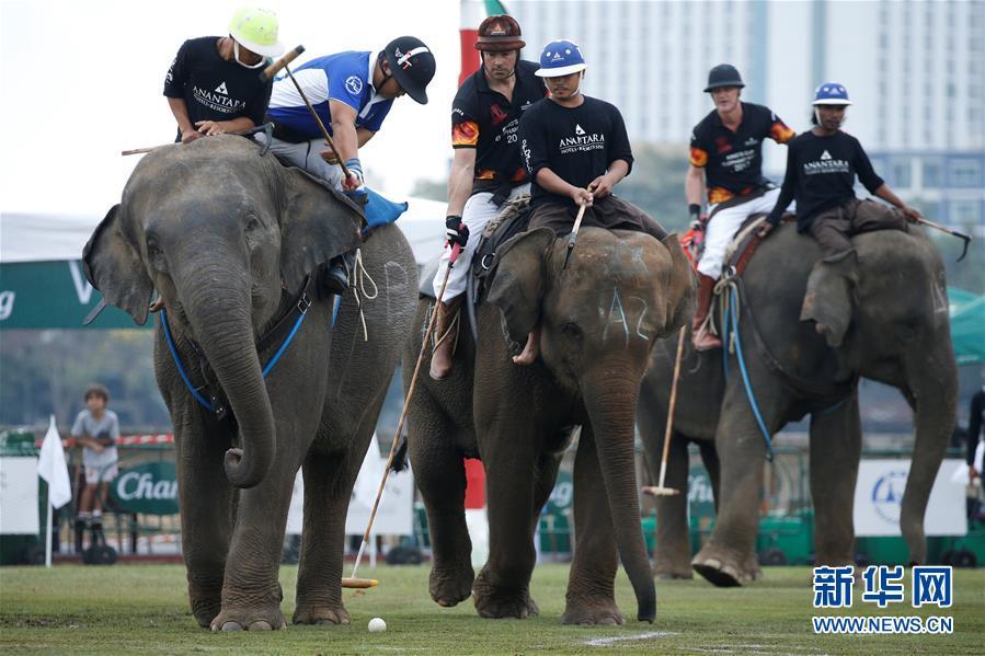 泰国大象马球赛