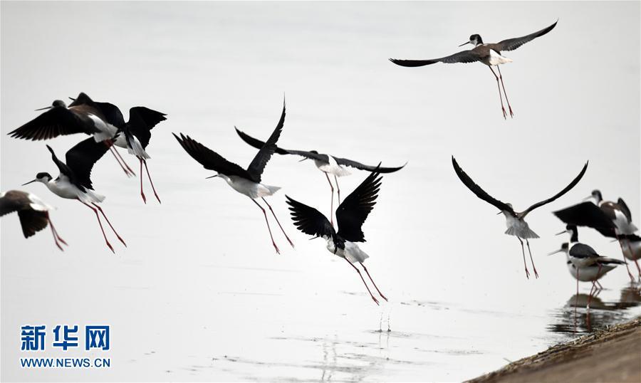 安徽霍邱水门塘 千亩水面万顷波