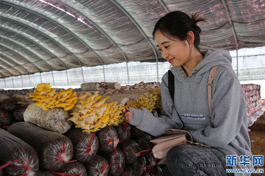 鲁山:葡萄残枝育蘑菇 生态循环助脱贫