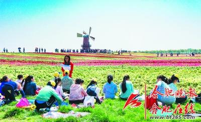 合肥市第四届花卉节今起盛装开幕
