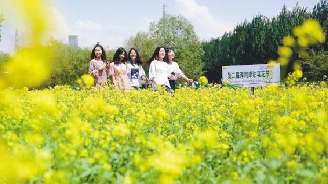 第二届浑河岸油菜花节开幕