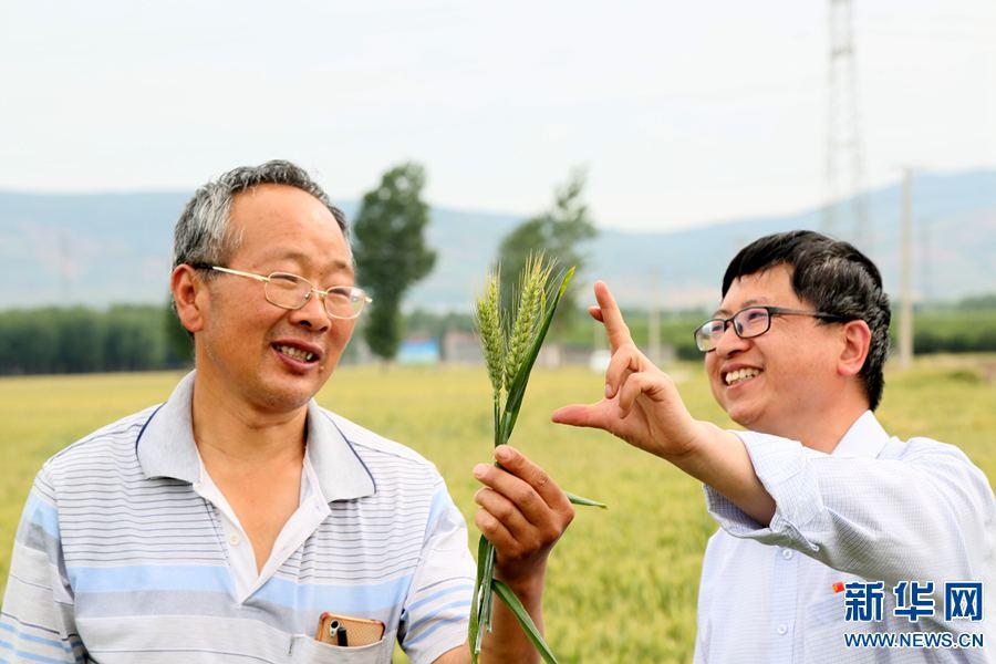 河南汝阳:实施科学管理  小麦丰收在望