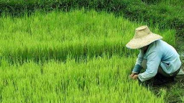 辽阳:12582农民种地的好助手