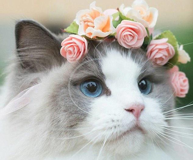 可爱小猫头饰图片