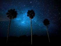 沼泽风情:星空璀璨魅惑 动物慵懒惬意