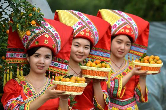 广西融安:桔园开园 金桔上市