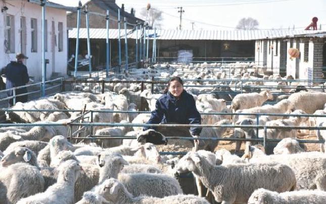 代县聂营村农家妇女乔林凤当羊倌发羊财