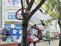 藏起来 挂树上 扔垃圾桶…… 昆明共享单车频频被虐