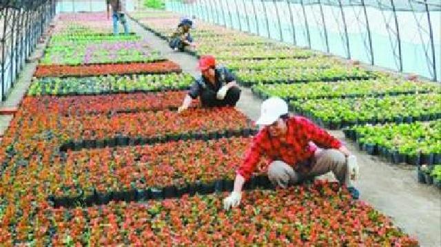 阜新现代农业示范带三年内将达20万公顷